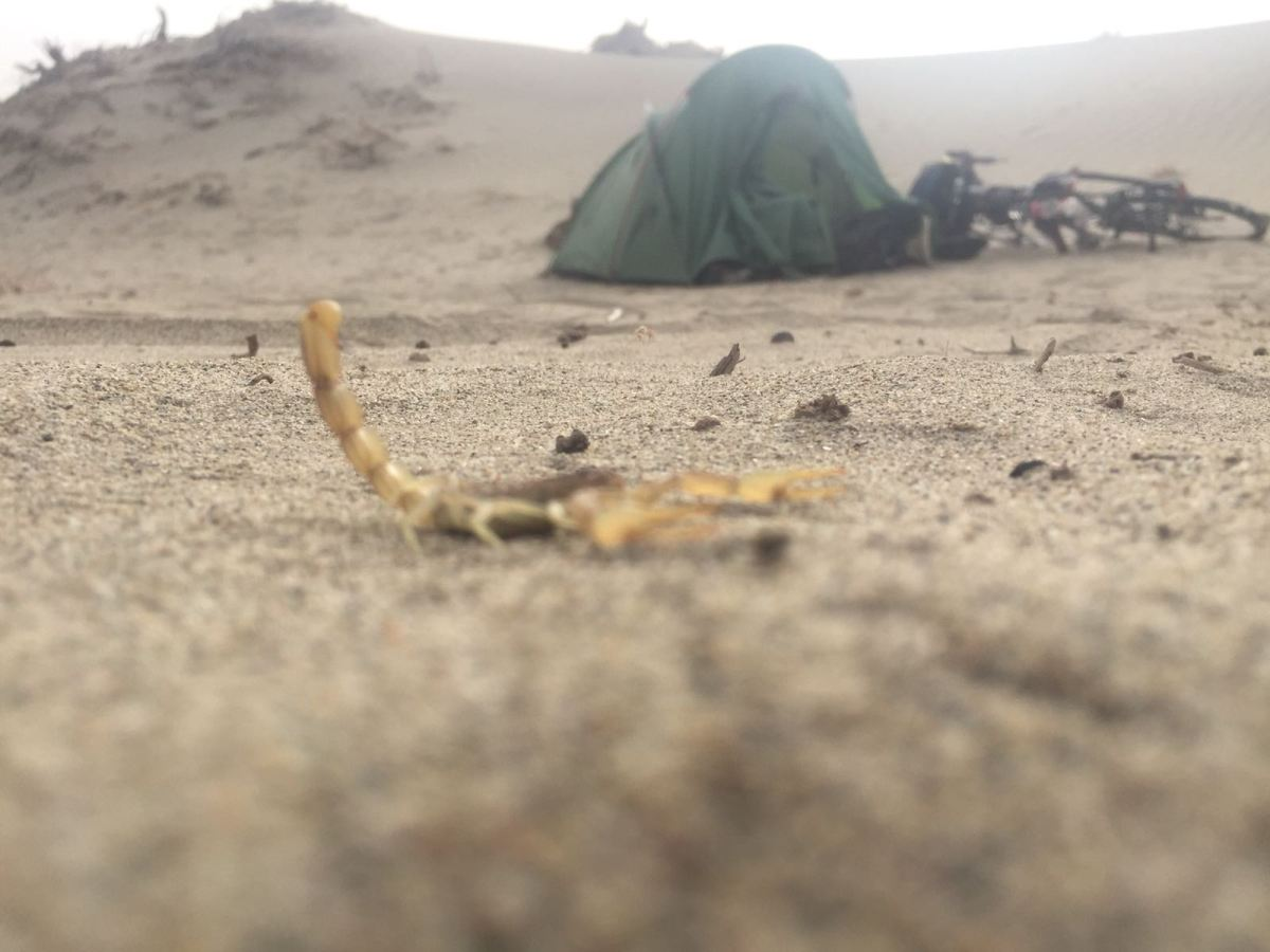 Sandstorms and scorpions