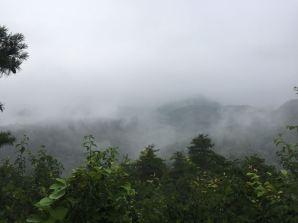 Mist-shrouded forest